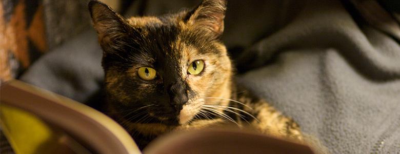 Reseña de Lo que aprendemos de los gatos, de Paloma Díaz-Mas